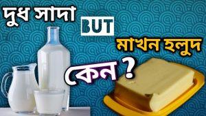দুধ সাদা, কিন্তু মাখন হলুদ কেন karukormo blog